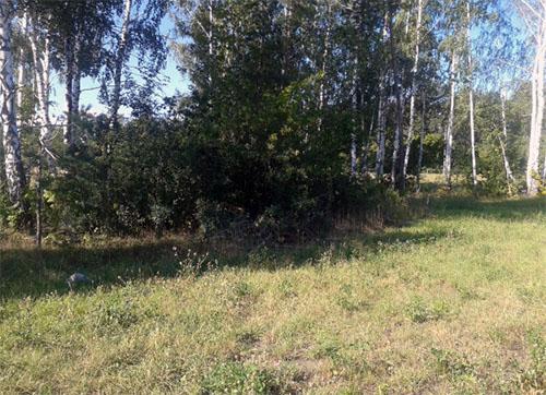 autostop-iz-peterburga-6