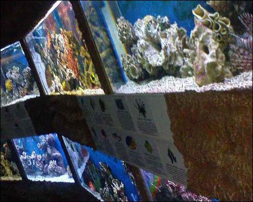 aquarium-v-alushte