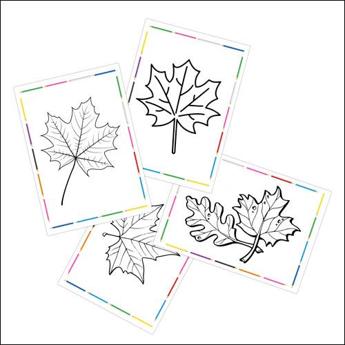 Раскраски кленовый лист А4 формата
