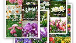 Карточки цветов с названиями: скачать и распечатать