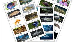 Карточки с рыбами: скачать и распечатать