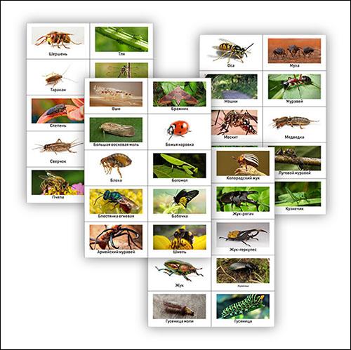 Карточки с насекомыми: скачать и распечатать