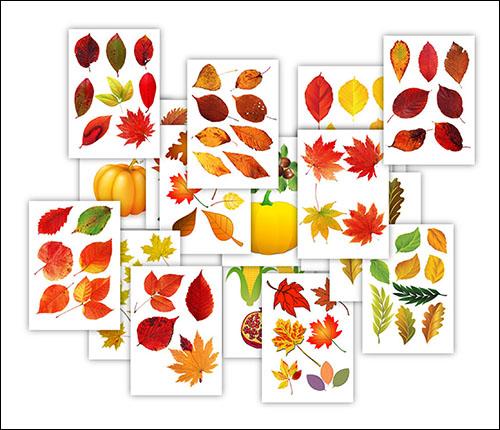Цветной шаблон осеннего листа: скачать и распечатать